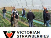 Victorian Stawberries - Wandin North