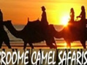 Broom Camel Safaris