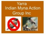 Yarra Indian Myna Action Group Inc