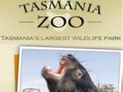 Tasmania Zoe