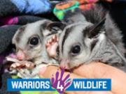 Warriors 4 Wildlife
