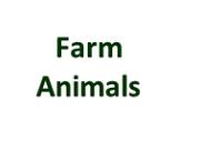 Farm Animal Page