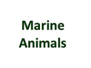 Marine Life Page